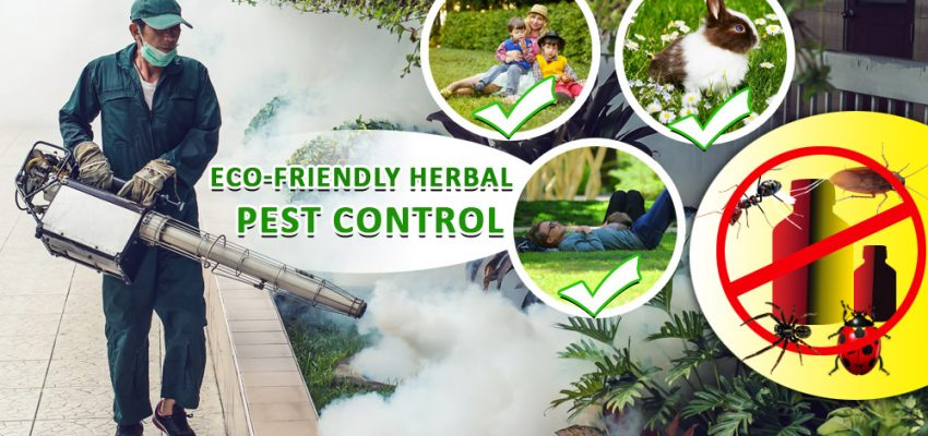 What Herbal Pest Control services in Delhi offer?