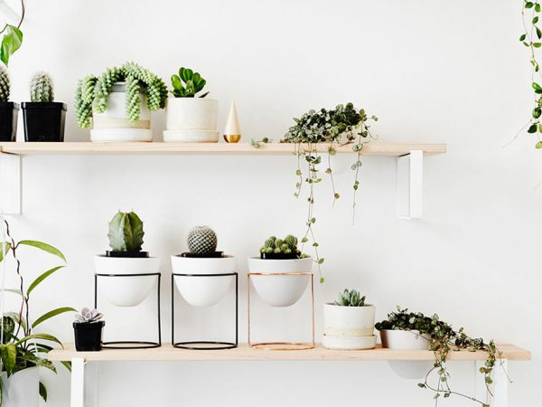 10 Magical Air-purifying Plants to Help You Go Green Everyday